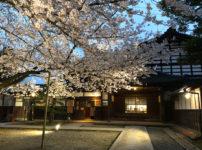 内山邸ソメイヨシノの夜桜ライトアップの花見