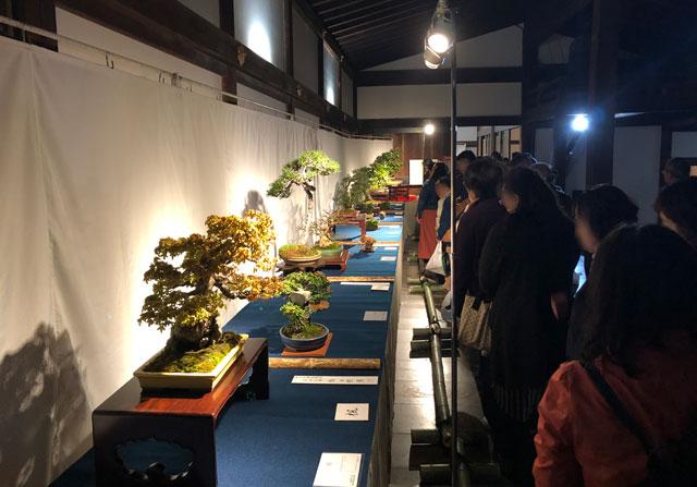 高岡市の国宝「瑞龍寺」のライトアップイベントと同時開催の「盆栽展」