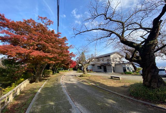 富山市呉羽山の紅葉、穴場紅葉スポットの「桜の広場展望台」