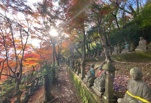 富山市呉羽山「長慶寺五百羅漢」の木漏れ日の紅葉