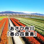 【春の四重奏】桜・菜の花・チューリップ・山、朝日町舟川の絶景!駐車場など情報