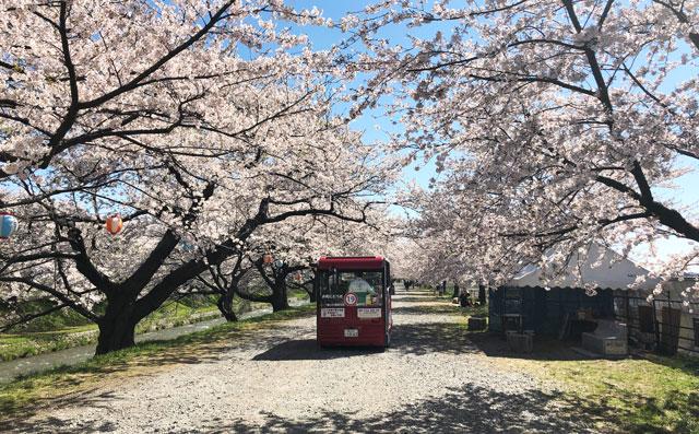 あさひ舟川「春の四重奏」の無料バス