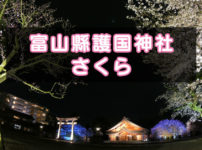 【富山縣護国神社の桜】神社の神秘さと桜が綺麗!夜桜ライトアップも幻想的☆