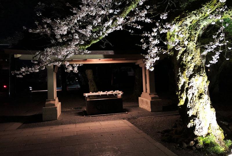 富山県護国神社の手水と夜桜