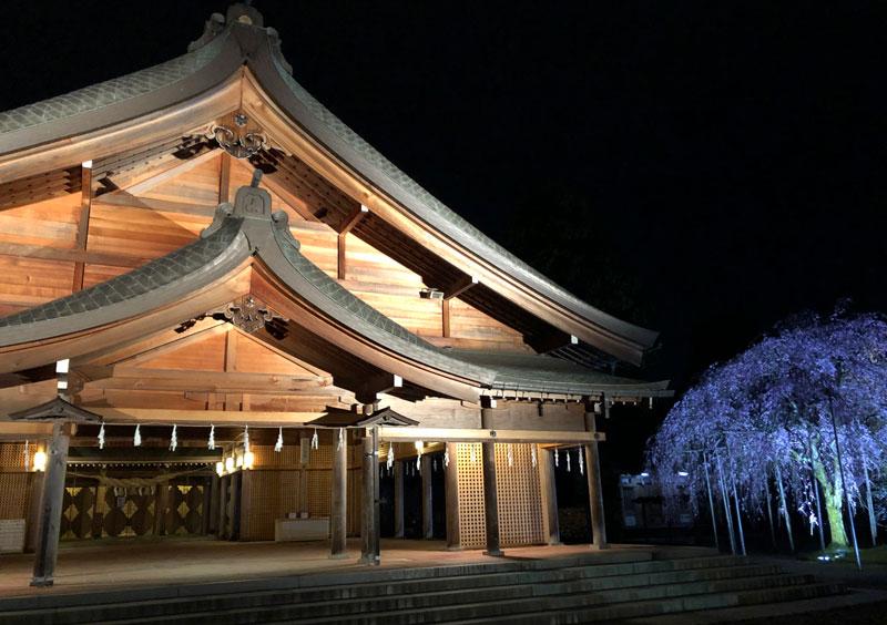 富山県護国神社の本殿とシダレザクラの夜桜