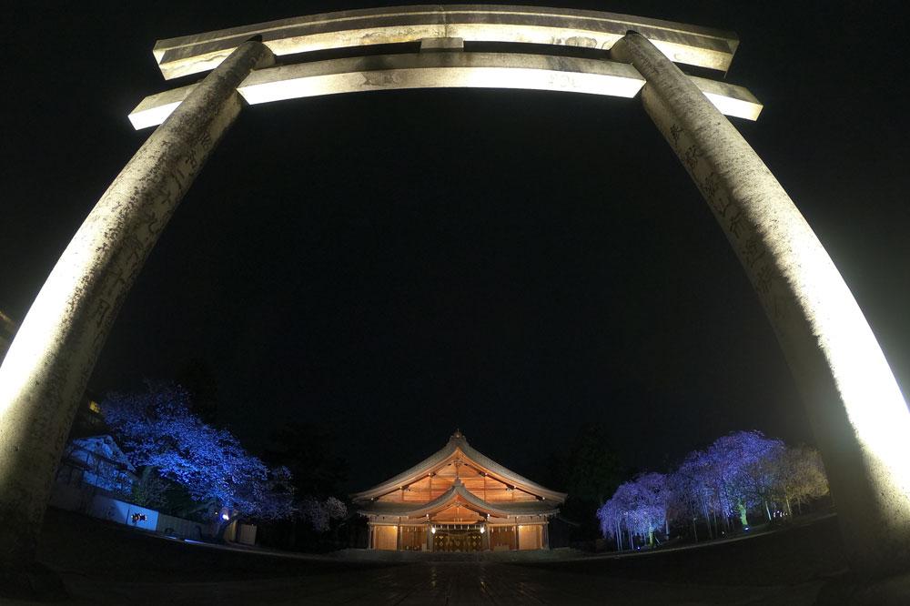 富山県護国神社の鳥居と夜桜