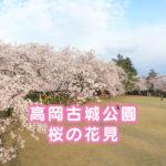 【高岡古城公園の桜】さくら名所100選☆花見と散歩にオススメ!