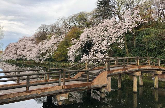 高岡古城公園のお堀にかかる小橋