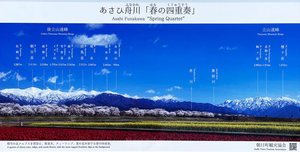 あさひ舟川「春の四重奏」から見える山の名前