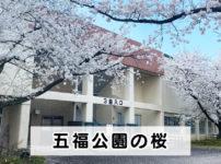 【五福公園の桜】夜桜ライトアップと県営富山野球場周りの桜が最高!