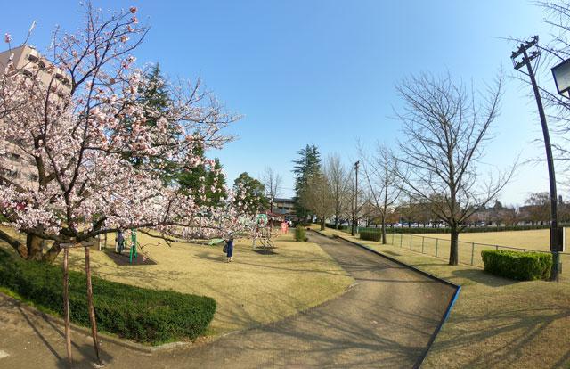 富山さくらの名所70選、富山県富山市五福公園の遊具広場の桜