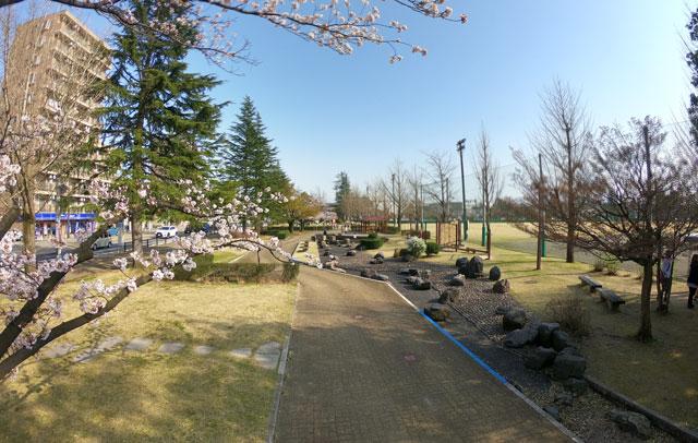 富山さくらの名所70選、富山県富山市五福公園のプロムナードの水場の桜