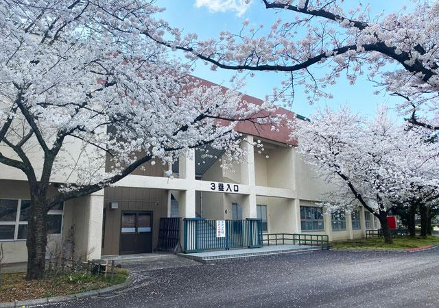富山さくらの名所70選、富山県富山市五福公園の県営富山野球場3塁入口前の桜