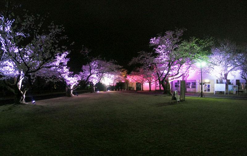 富山さくらの名所70選、富山県富山市五福公園の桜広場の夜桜