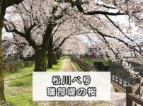【松川べり磯部堤の桜】小道と桜のトンネルが綺麗!空いてる穴場のお花見スポット☆