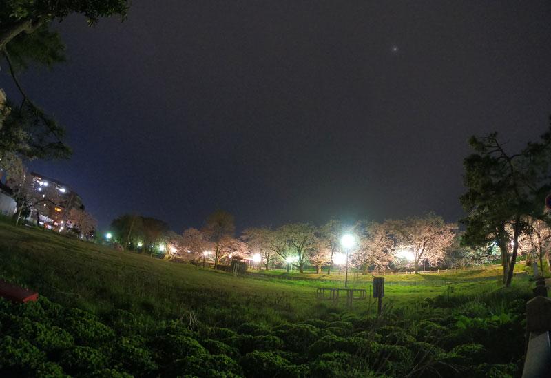 松川べり磯部堤の夜桜と磯部町公園