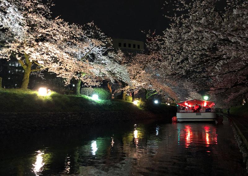 富山市の松川べりの夜桜ライトアップと松川遊覧船