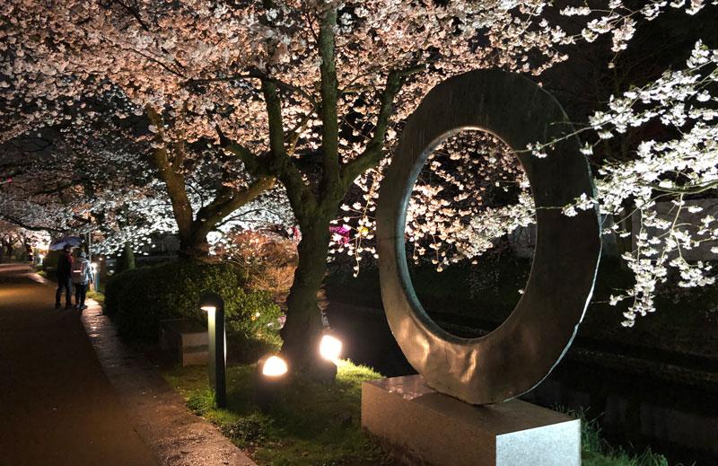 富山市の松川べりの夜桜ライトアップと散歩道