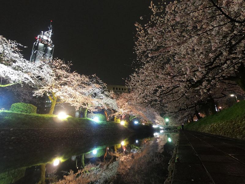 富山市の松川べりの夜桜ライトアップ、松川に映った夜桜と富山市役所