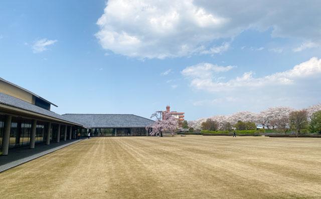 富山市五福の富山県水墨美術館のベニシダレザクラ(遠距離)
