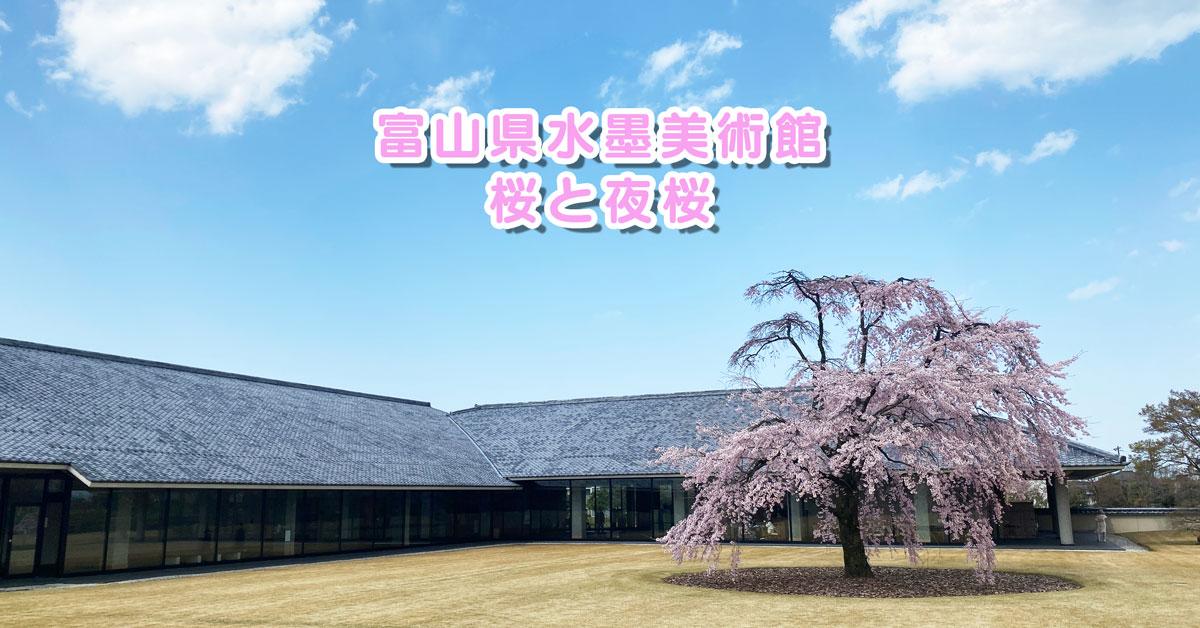 【富山県水墨美術館の桜】芝生広場に1本のシダレザクラの存在感!夜桜ライトアップも。