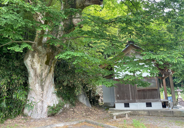 富山市婦中町安田の朝日の滝の大欅と御堂