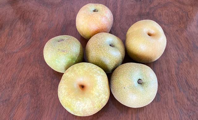 富山県の特産品「呉羽梨」の様々な品種