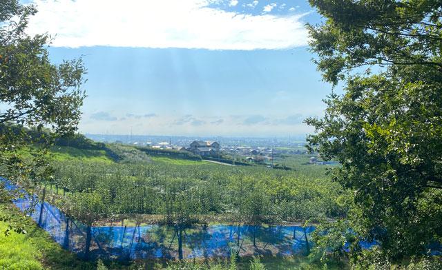 富山県の特産品「呉羽梨」を栽培する呉羽梨畑