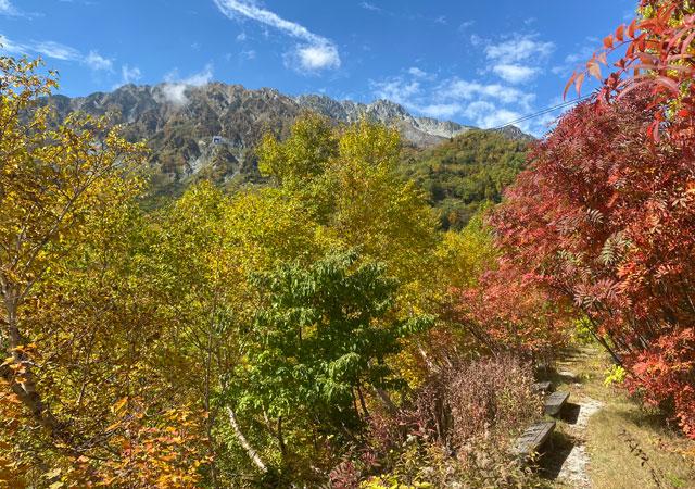 立山黒部アルペンルート黒部平の「高山植物観察園」からの景色