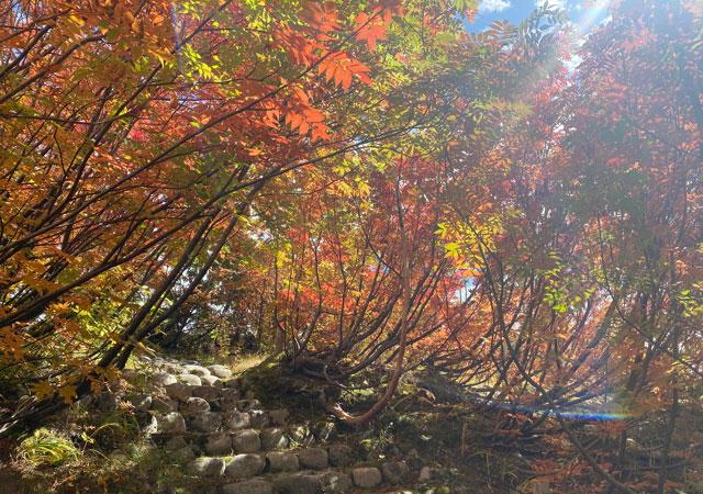 立山黒部アルペンルート黒部平の「高山植物観察園」の紅葉