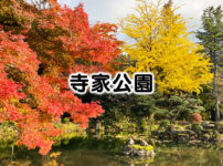 【寺家公園】紅葉の名所!公園内のスポットを紹介【トンネルは怖い】