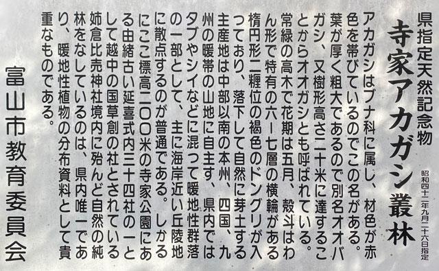 富山市旧大沢野の新緑と紅葉の名所「寺家公園」のアカガシ樹林の説明