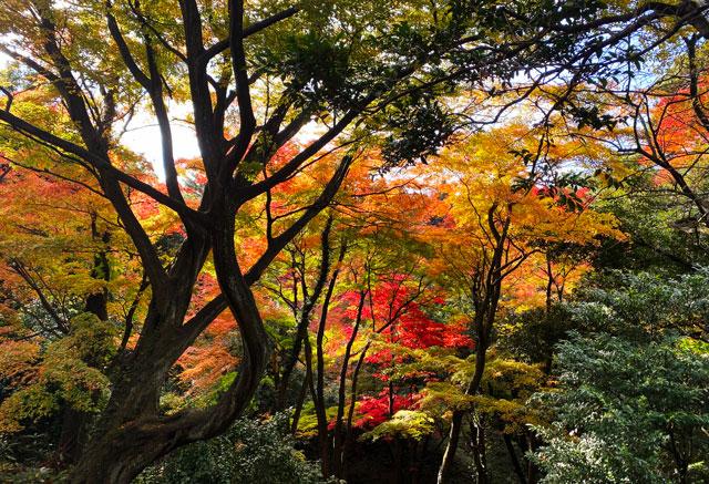 富山市旧大沢野の新緑と紅葉の名所「寺家公園」の森の中の紅葉