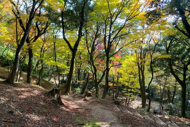 富山市旧大沢野の新緑と紅葉の名所「寺家公園」のアカマツ樹林