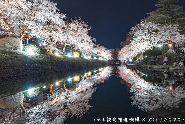 富山の写真家イナガキヤストさんが撮影した松川べりの夜桜