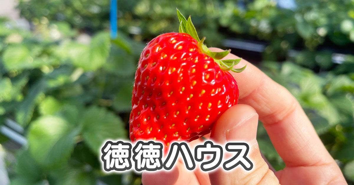 【徳徳ハウス】富山市まちなかでイチゴ狩りしてきた【料金&アクセス】