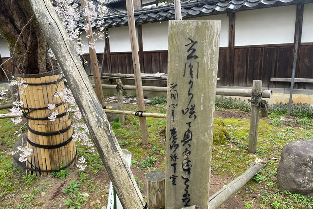 富山県南砺市城端別院善徳寺の枝垂れ桜の俳句