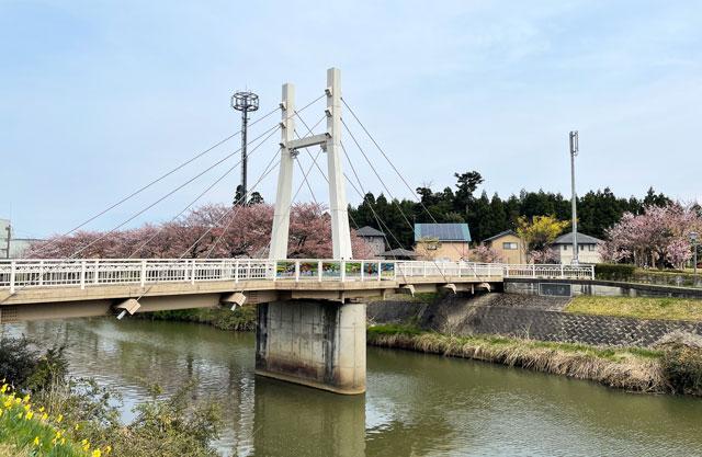 「鏝絵と下条川千本桜まつり」の桜並木と花見橋