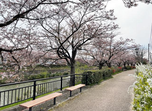 「鏝絵と下条川千本桜まつり」の桜並木の散歩道