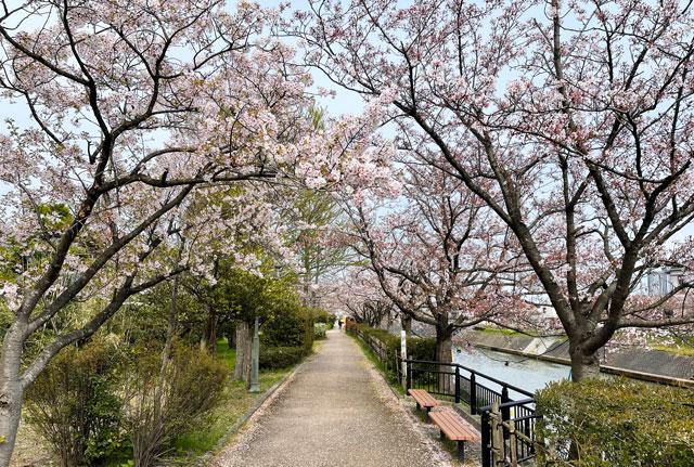 「鏝絵と下条川千本桜まつり」の桜並木のトンネル