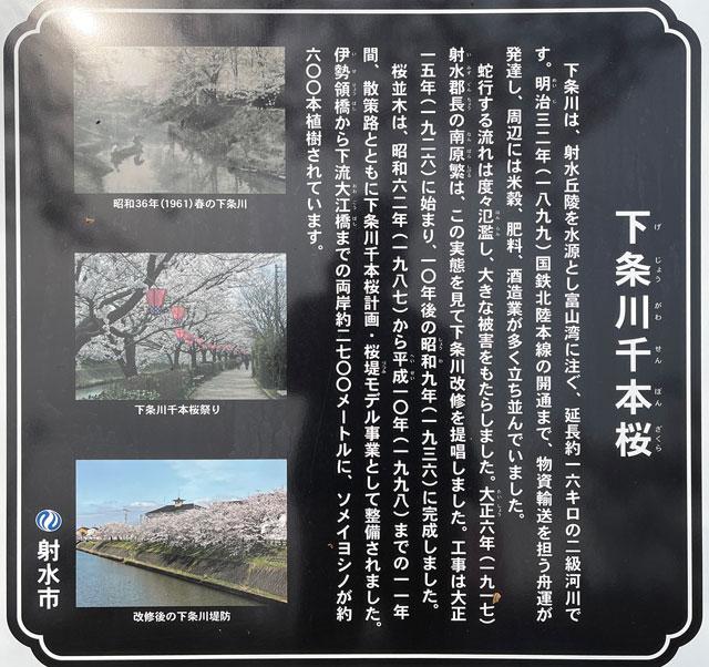 「鏝絵と下条川千本桜まつり」の下条川千本桜の歴史