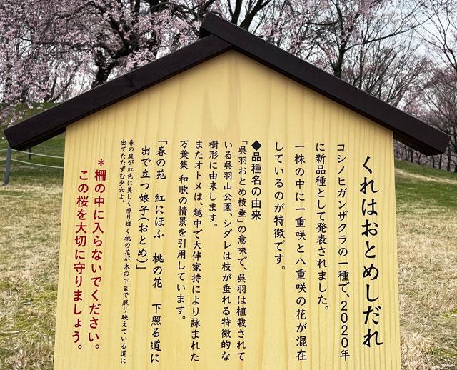富山市の呉羽山公園・都市緑化植物園の新種の桜「クレハオトメシダレ」の説明書き