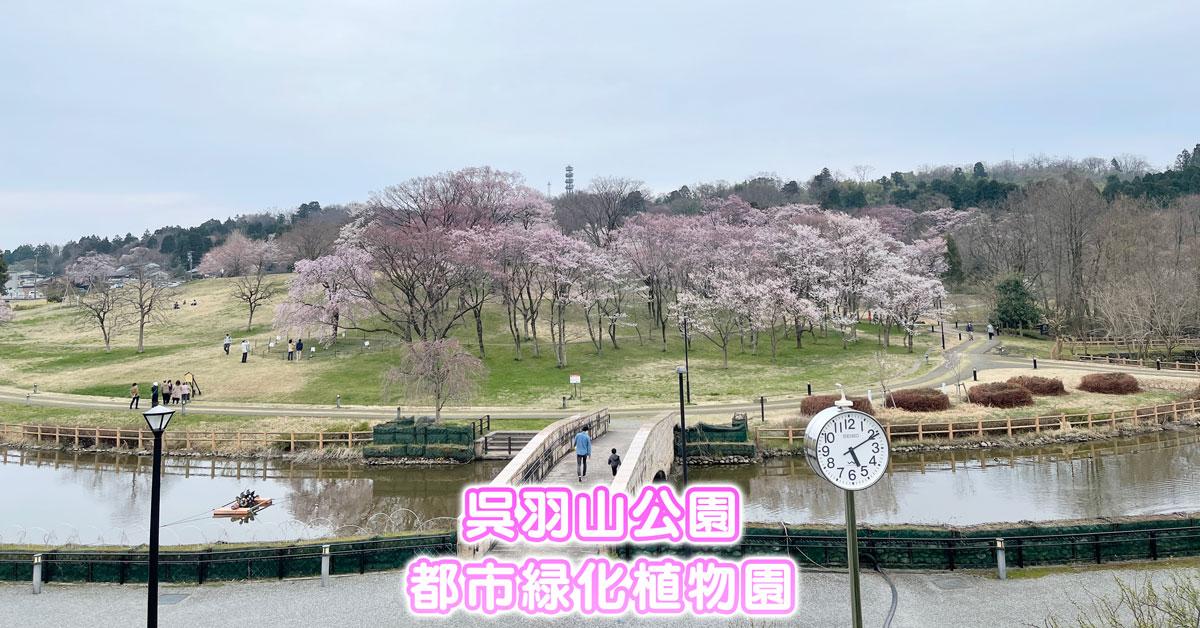 【呉羽山公園・都市緑化植物園】桜・菜の花などがキレイ【駐車場やバス情報】