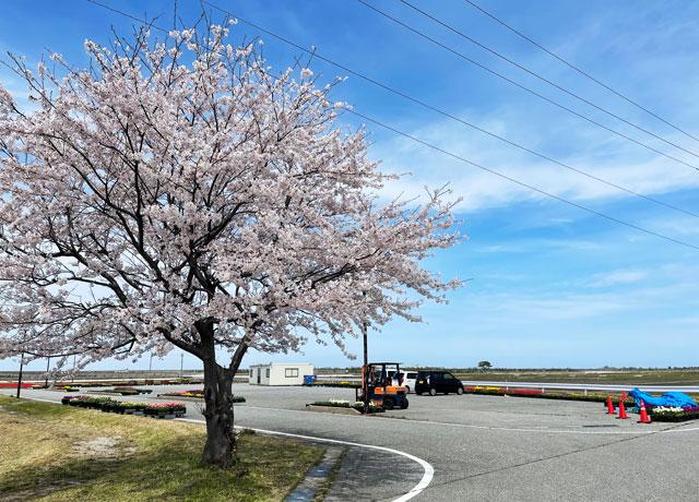 富山県入善町の「入善フラワーロード」駐車場