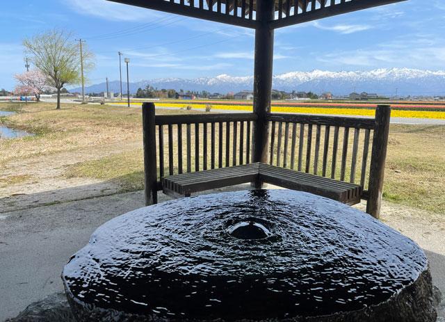 富山県入善町の「入善フラワーロード」の「園家山ゆう水池」