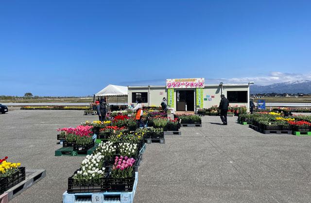 富山県入善町の「入善フラワーロード」のチューリップの販売所