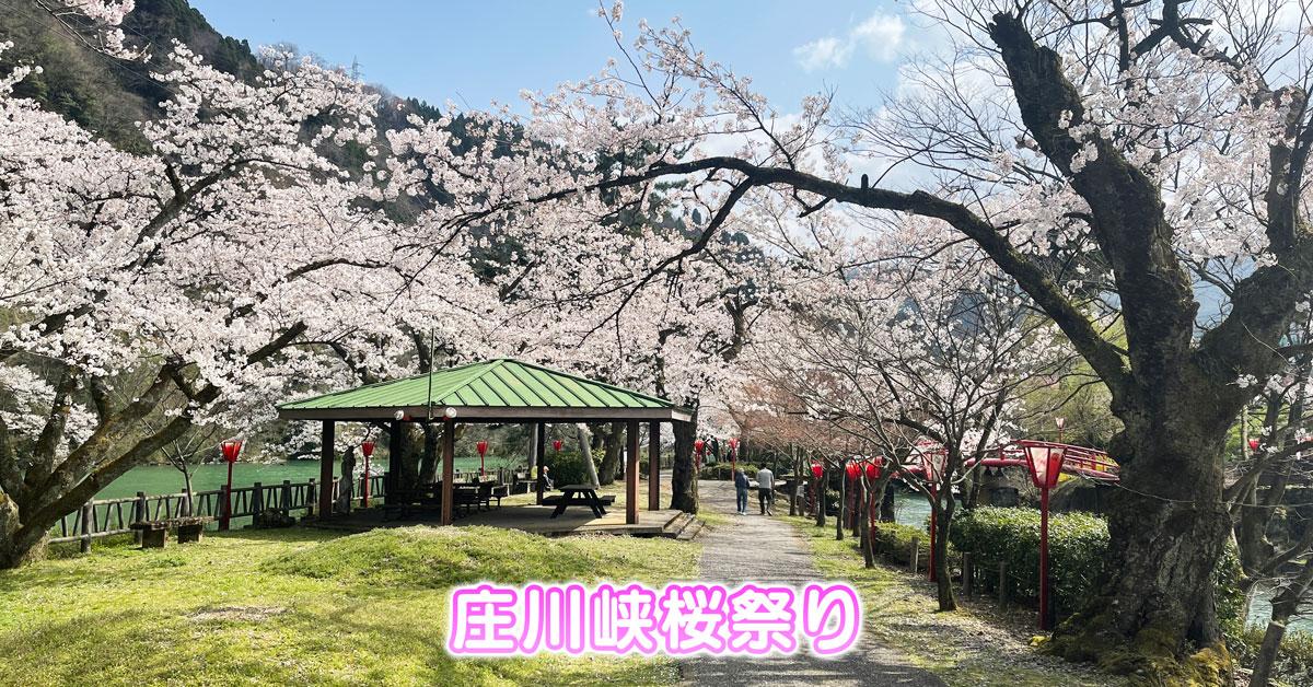 【庄川峡桜まつり】お花見イベントや夜桜ライトアップ!