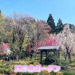 【天神山ガーデン】魚津にある映える花畑【ハナモモが有名】