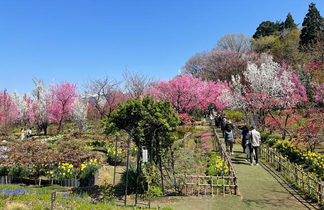 魚津市「花の森 天神山ガーデン」の入口付近の様子