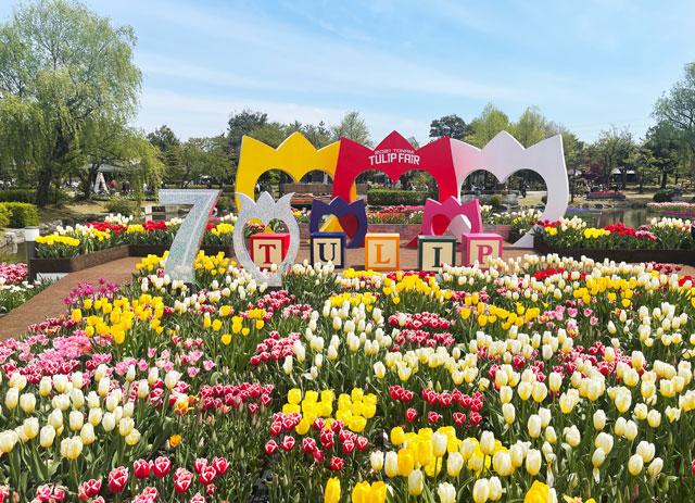 富山県砺波市「となみチューリップフェア」の70周年記念花壇